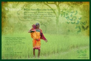 Wayanad: Where butterflies come home to. First advertisement on Wayanad from TBY