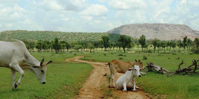 Green-Rajasthan-1