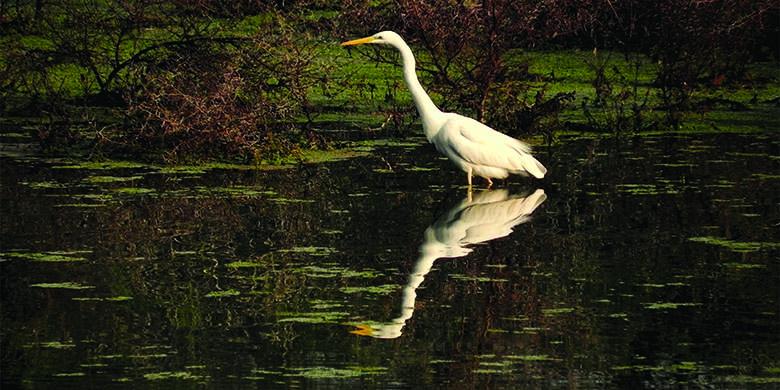 Birding-in-Bharatpur-1