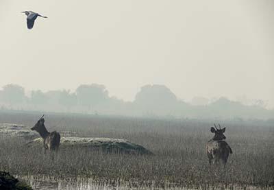 Birding in Bharatpur